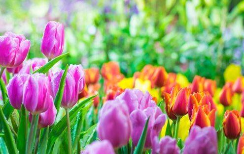 Frühjahrsputz für den Körper